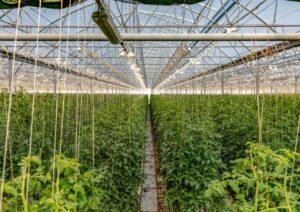 Sistemi remotizzati e serre 2.0: la tecnologia applicata all'agricoltura sarda